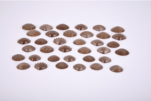 Eco-Friendly Tactile Shells - Pk36