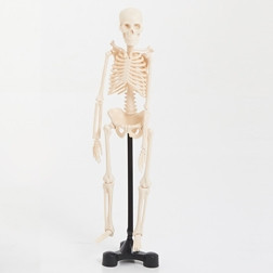 Mini Skeleton - 460mm